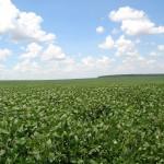 Esperan nuevo aumento de la soja