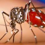 La OMS declaró el alerta en Ámerica por epidemia del virus Zika