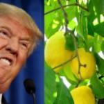 Trump no permitirá el ingreso de los limones argentinos
