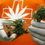 Uruguay: Las farmacias ya venden cannabis producida bajo control estatal