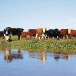 Por las inundaciones, esperan aumentos del 20% en lácteos, carne y panificados