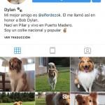 Dylan, el perro instagramer de Alberto Fernánez, va por la corona de Balcarce